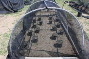 blog-pic-shade-and-soil-moisture1